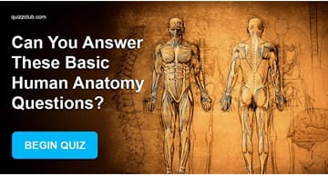 Science Quiz Test: Can You Answer These Basic Human Anatomy Questions?