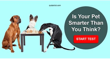 Personality Quiz Test: Is Your Pet Smarter Than You Think?