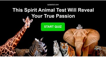 Personality Quiz Test: This Spirit Animal Test Will Reveal Your True Passion