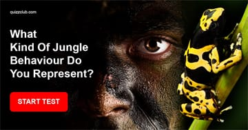Personality Quiz Test: What Kind Of Jungle Behaviour Do You Represent?