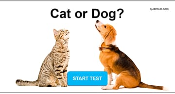 Personality Quiz Test: Are You a Cat Person or a Dog Person?