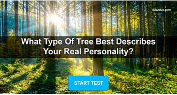 Nature Quiz Test: What Type of Tree Best Describes Your Real Personality?