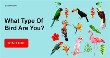 Personality Quiz Test: What Type of Bird Are You?