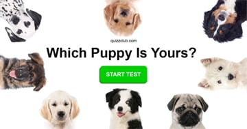 Personality Quiz Test: Which Mixed Breed Puppy Should You Adopt?
