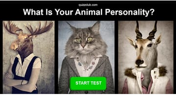Personality Quiz Test: What Is Your Animal Personality?