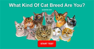 Personality Quiz Test: What Kind of Cat Breed Are You?
