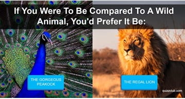 Personality Quiz Test: What Kind Of Pet Were You In Your Past Life?