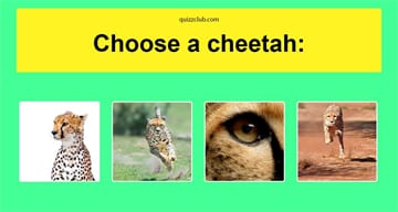 Personality Quiz Test: This Spirit Animal Test Will Reveal What Kind Of Self Care You Need