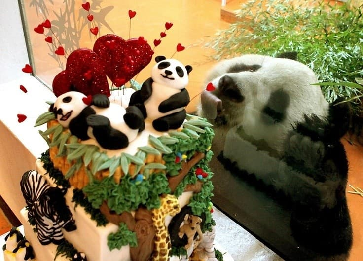 Geography Trivia Question: What animals lack the receptor for sweetness?