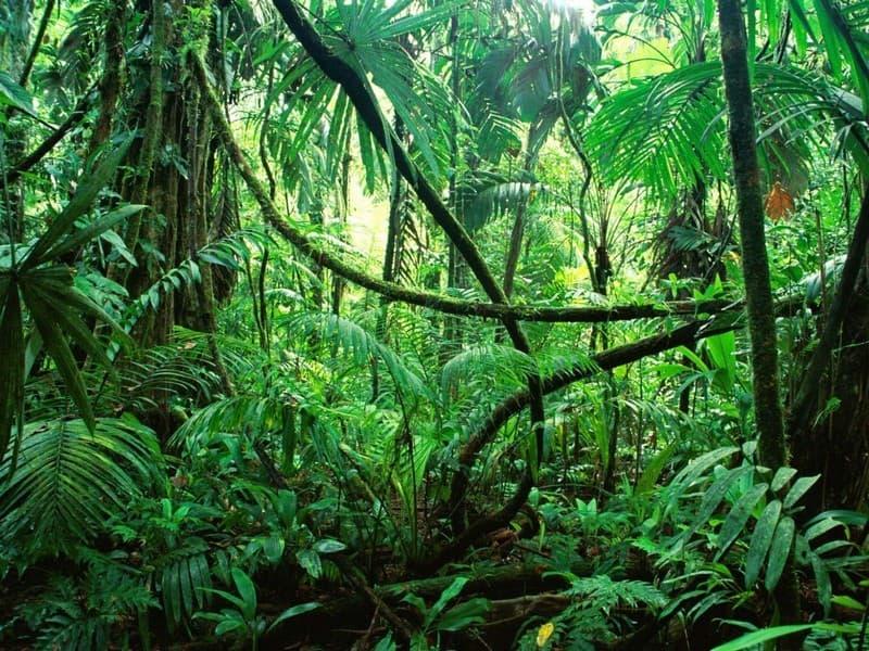 Geographie Wissensfrage: Auf welchem Kontinent befindet sich der Amazonas-Regenwald?