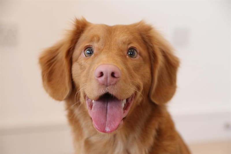 What is a dog's most powerful sensory organ?
