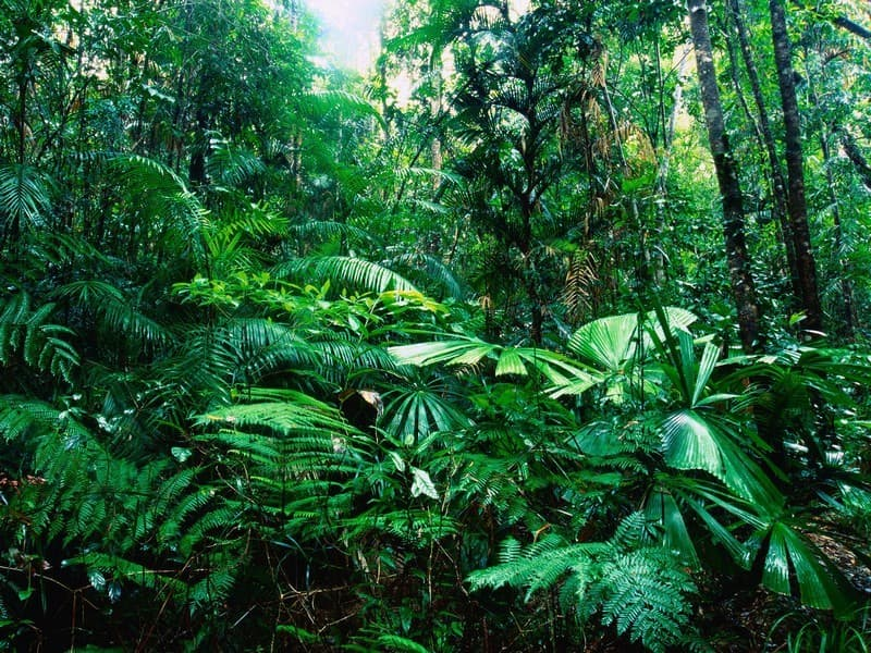 Geography Trivia Question: What is the world's largest tropical rainforest?