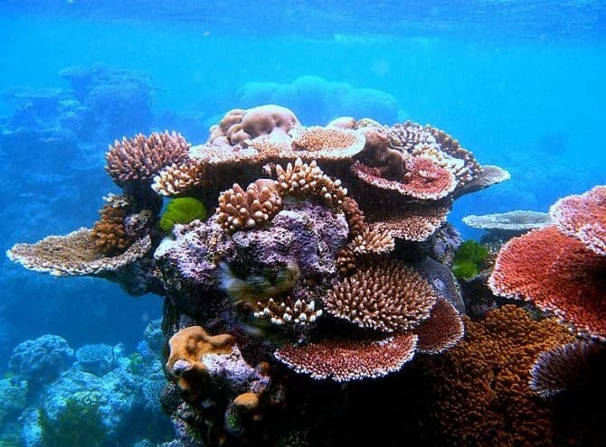 Geography Trivia Question: Where are the roads made of corals?