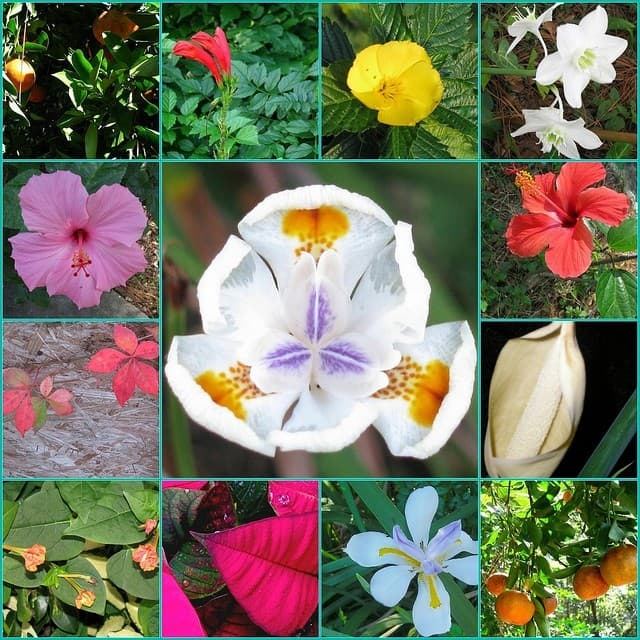 Geography Trivia Question: Which country has the most plant species?