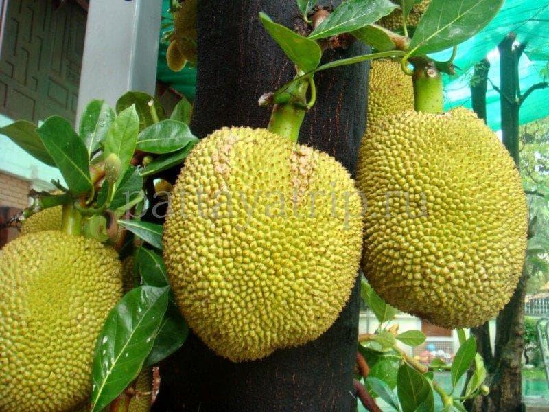 Природа Вопрос: Как называются эти плоды?
