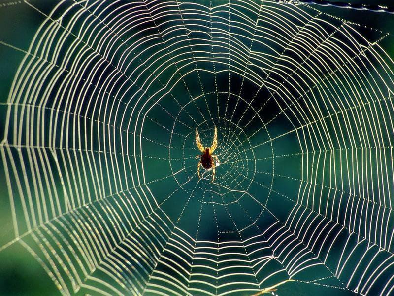 Наука Вопрос: В основе нити паука лежит вещество, называемое фибрин. А какова его химическая природа?