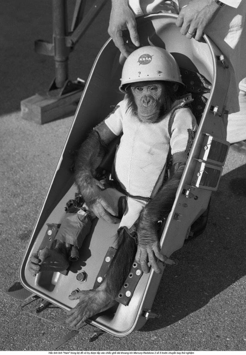 Science Trivia Question: What was the name of the first primate successfully launched into space?