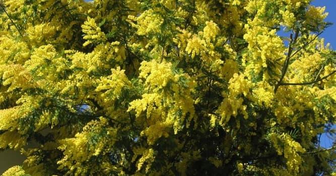Природа Вопрос: Какое растение на Земле самое быстрорастущее?