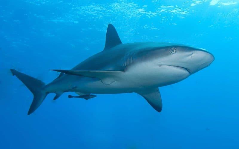 Природа Вопрос: Сколько костей у акулы?