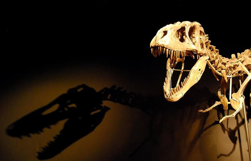 Science Trivia Question: Dinosaurs and humans did exist at the same time.