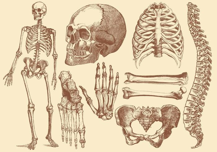 Science Trivia Question: The innermost part of bones contains what?