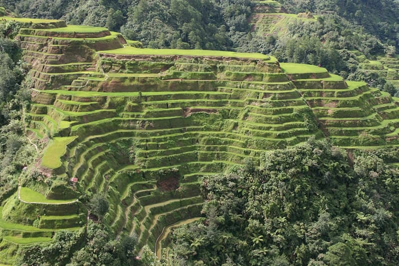 Culture Trivia Question: What do you call 2,000-year-old terraces that were carved into the mountains of Ifugao in the Philippines?