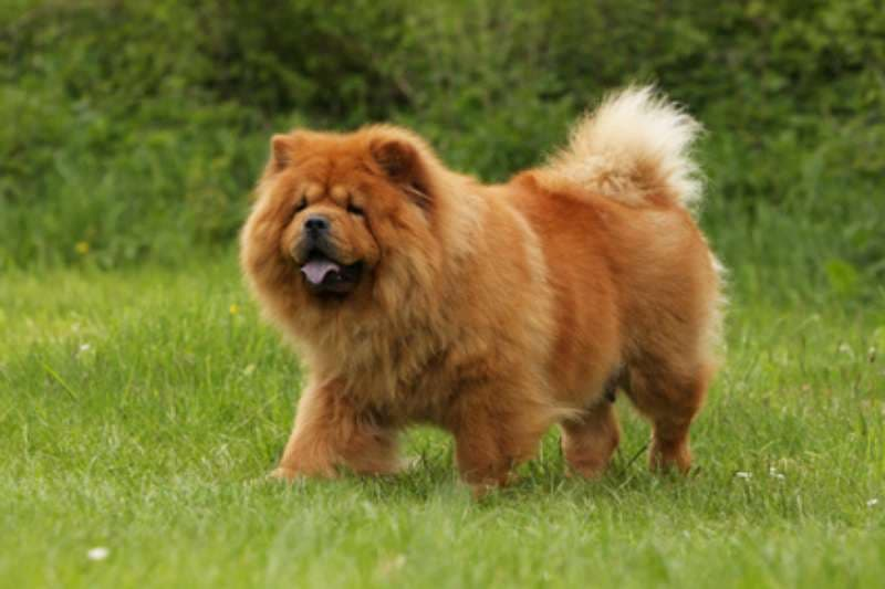 Nature Trivia Question: What dog breed is this?