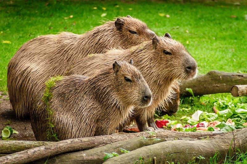 Природа Вопрос: Что за животное изображено на фотографии?