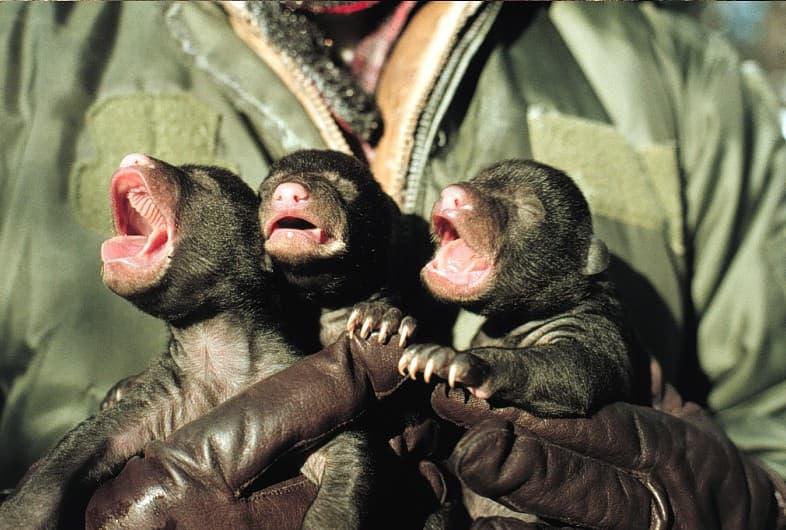 Природа Вопрос: Детеныш какого животного изображен на картинке?