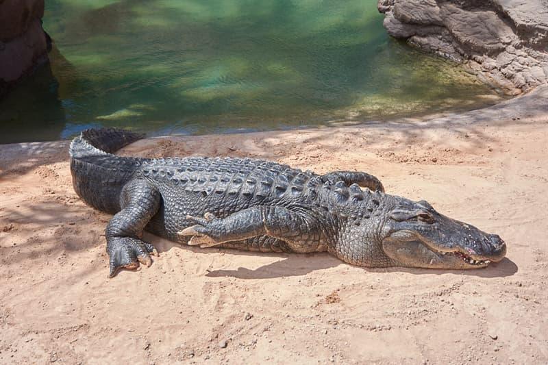 Природа Вопрос: Где находится единственное место на Земле, где в естественной среде обитания аллигаторы и крокодилы сосуществуют вместе ?