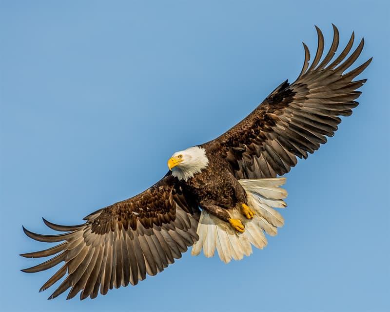 Природа Вопрос: Какая птица имеет самый большой размах крыльев?