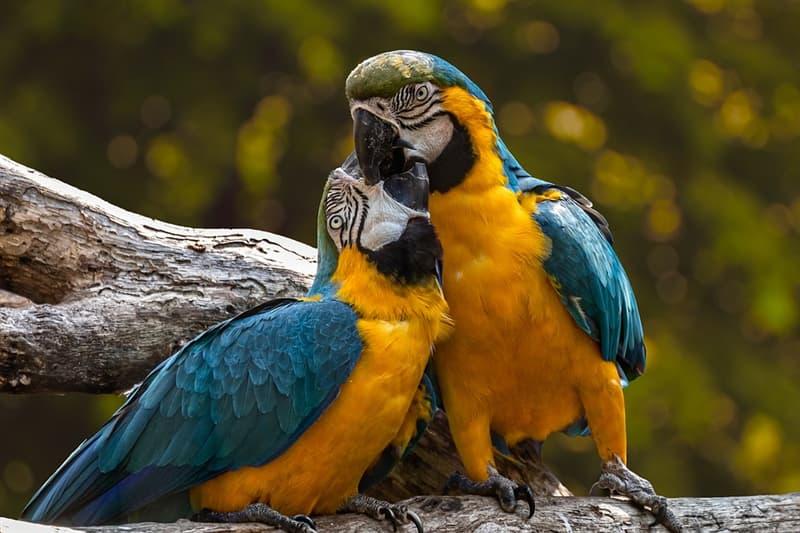 """Общество Вопрос: Кому принадлежит знаменитая фраза """"Когда орлы молчат, болтают попугаи""""?"""