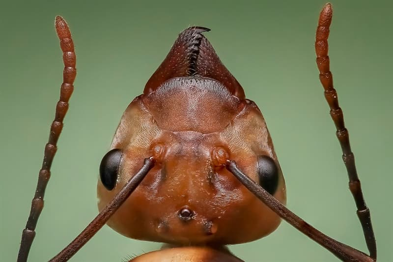 Nature Trivia Question: True or false: There are more than 1.5 million ants for every person on earth.