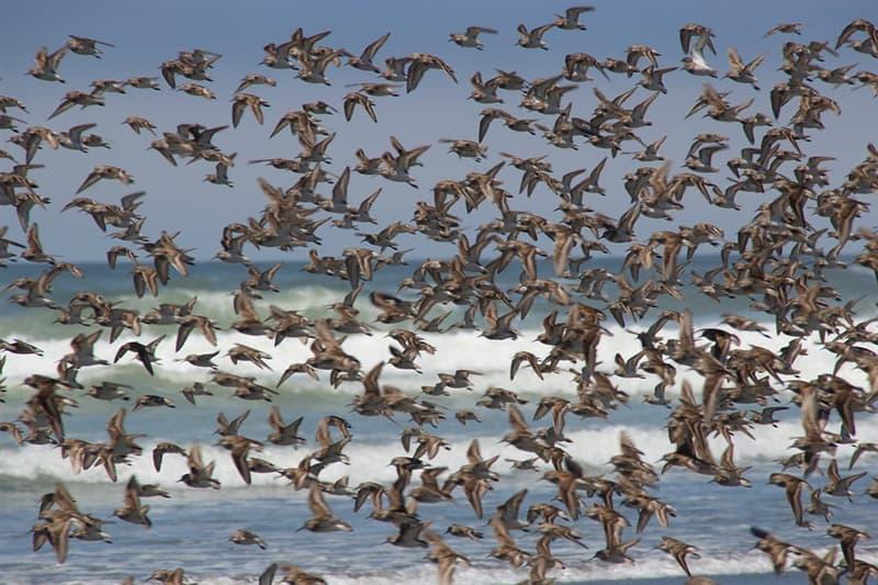 Природа Вопрос: У какой птицы ноздри находятся на конце клюва, а не у основания?