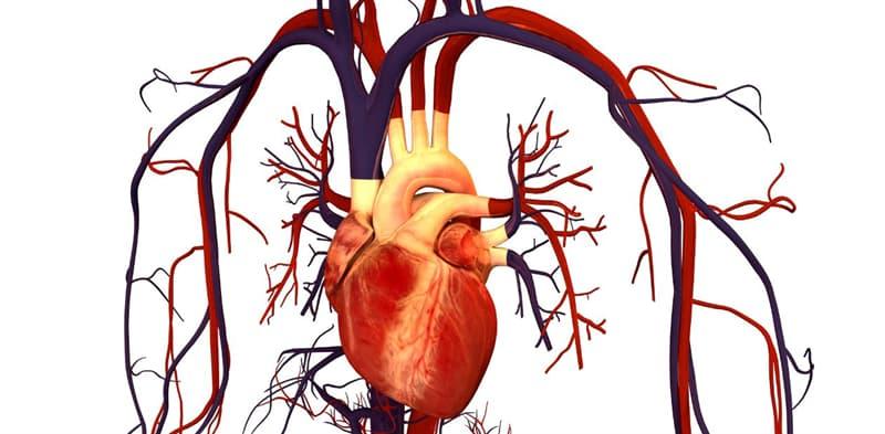 Природа Вопрос: У кого из холоднокровных животных четырехкамерное сердце?