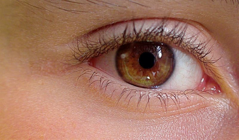 Наука Вопрос: Какая часть человеческого глаза осуществляет регулирование количества света, проходящего через зрачок?