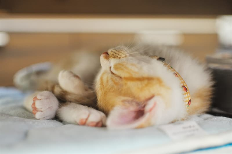 Science Trivia Question: What is paradoxical sleep also called?