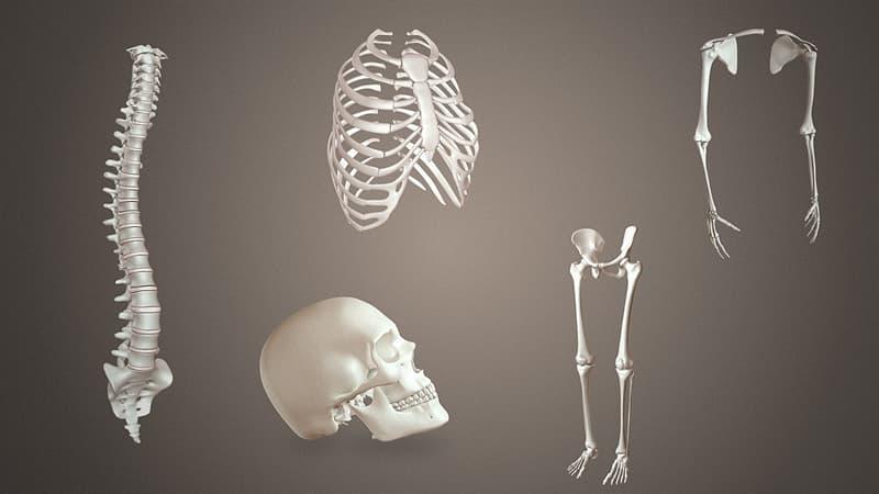 Наука Вопрос: Как на латыни называется кость ключицы?