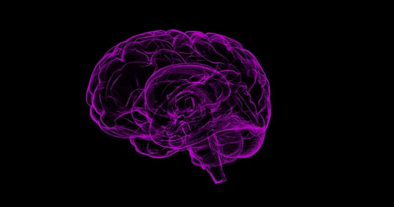 Science Trivia Question: What is the name of the largest part of the human brain?
