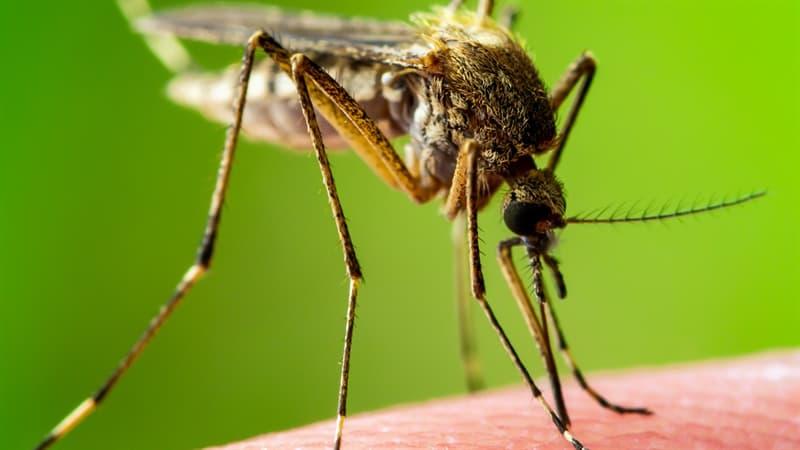 Naturaleza Trivia: ¿Los mosquitos que pican a la gente son machos o hembras?