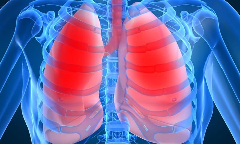 Наука Вопрос: Какое лёгкое человека при вдохе вмещает больше воздуха?