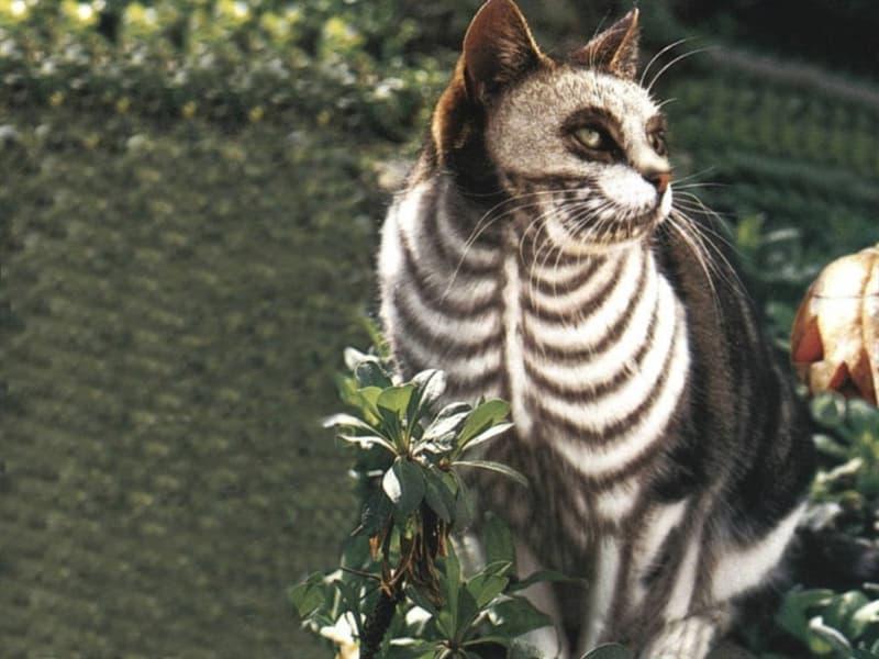 Природа Вопрос: Сколько в среднем костей у домашней кошки?