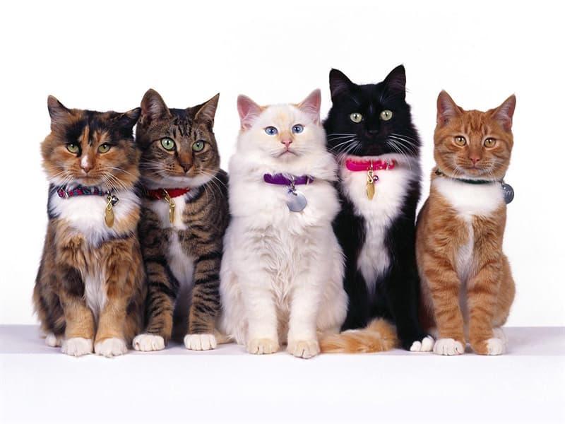 Природа Вопрос: В каком городе состоялась самая первая выставка кошек?
