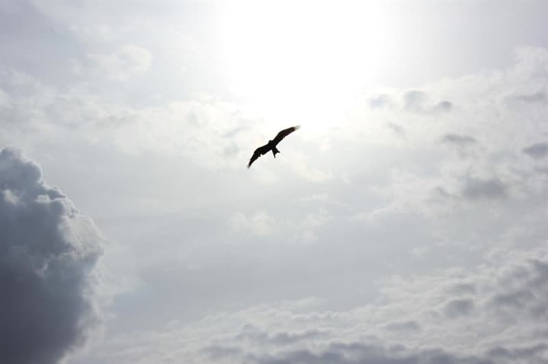 Nature Trivia Question: Which bird in nature flies at the highest elevations?