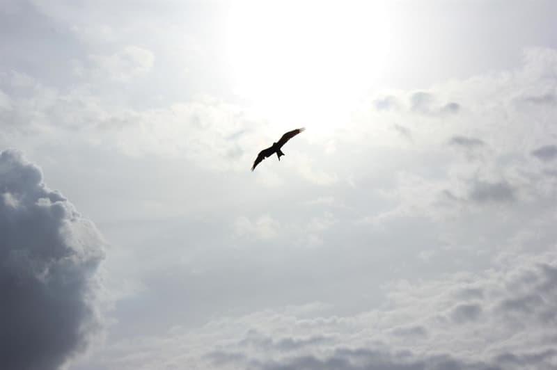 Natur Wissensfrage: Welcher Vogel fliegt auf den höchsten Lagen?