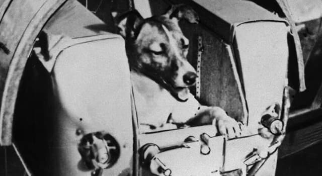 Science Trivia Question: What is the name of the Russian dog launched into Space in 1957?