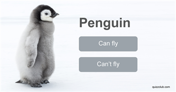 animals Quiz Test: Only 1 in 10 People Can Identify Which of These Animals Can Fly