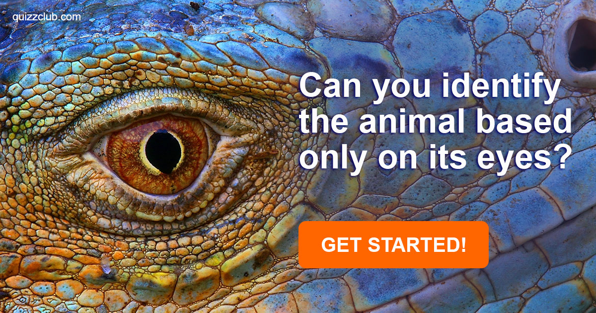 Can You Identify The Animal Based    | Trivia Quiz | QuizzClub