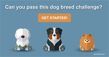 animals Quiz Test: Can You Pass This Dog Breed Challenge?