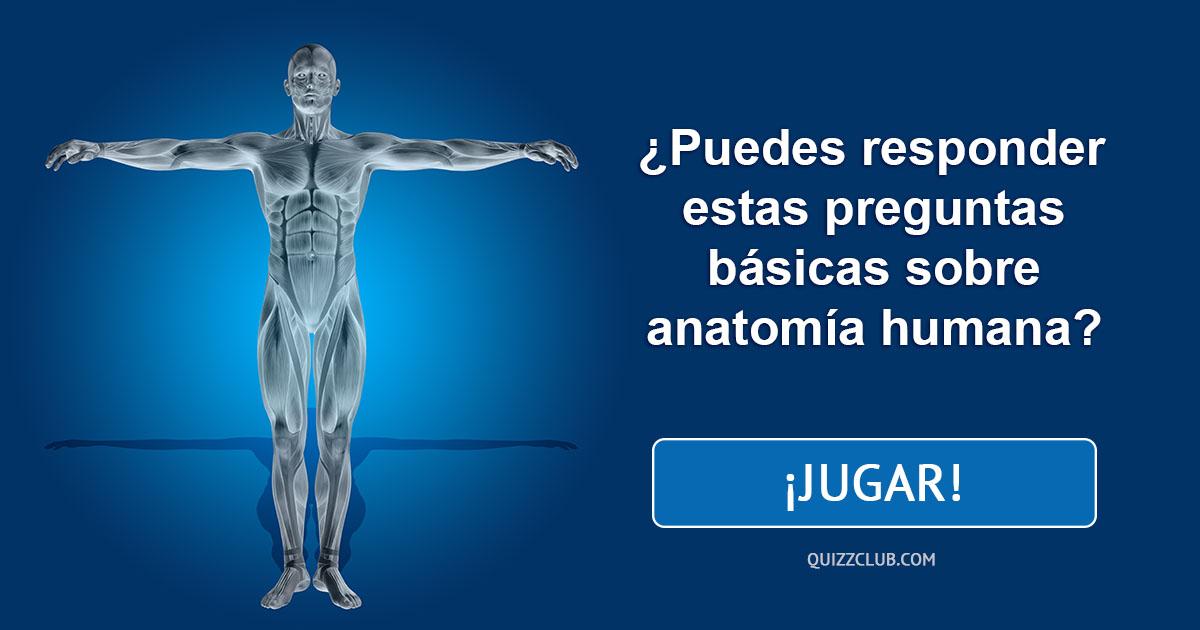 Magnífico Cuestionario Básico De La Anatomía Humana Molde - Imágenes ...